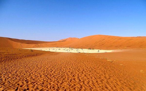 جنگل بیبرگ 900 ساله در بیابان نامیبیا