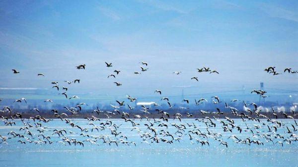 چهارمحال و بختیاری عاری از آنفلوآنزای فوق حاد پرندگان