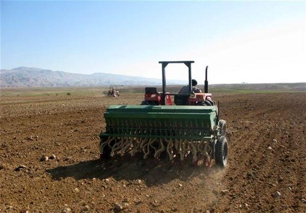 کشت گندم در استان بوشهر آغاز شد