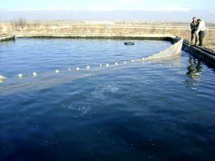 160 هزار  بچه ماهی در استخرهای مرودشت رها سازی شدند.