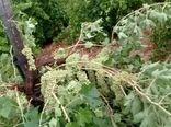 خسارت تگرگ به کشاورزی میمند فیروزآباد
