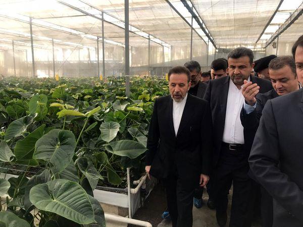 واعظی بر حمایت دولت از کشت گلخانهای تاکید کرد
