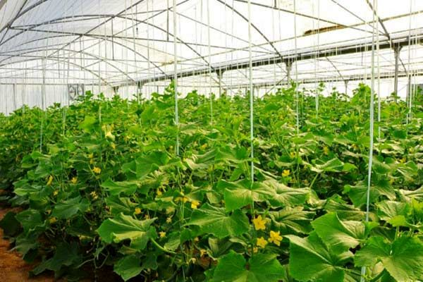 6 شهرک گلخانهای در شهرستانهای ابرکوه و خاتم احداث خواهد شد