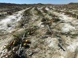 خسارت 281 میلیار ریالی سرمازدگی به کشاورزان سرباز