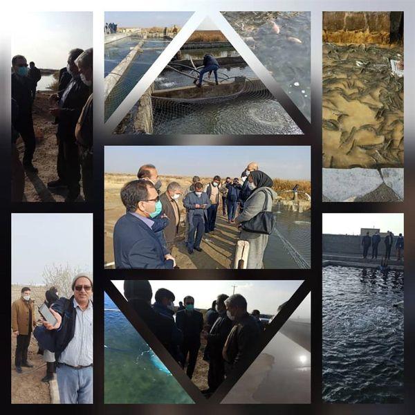 وجود ظرفیت آبهای نامتعارف و لبشور برای تولید آبزیان در اصفهان