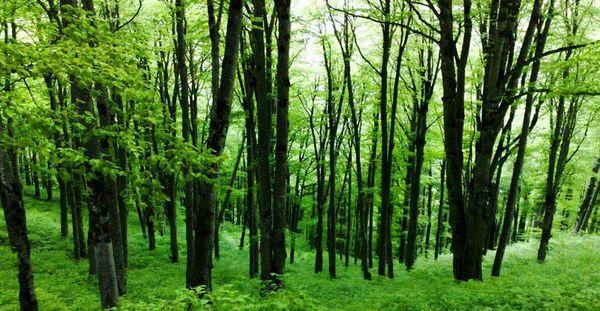 رتبه 14 سازمان جنگل ها از بین 148 کشور جهان بر اساس شاخص EPI در حفظ پوشش گیاهی و جنگل