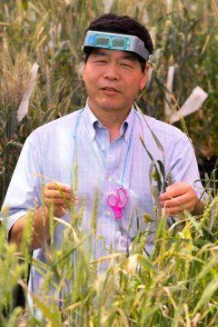 گندم دریایی به عنوان منبع جدیدی برای مقاومت در مقابل ویروس های گندم؟