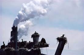 قناری در معدن زغال سنگ: تاثیرات جهانی آلودگی هوا بر پرندگان