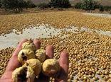 استهبان پایانه صادراتی محصول انجیر در ایران باشد