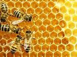 آذربایجان شرقی رتبه اول بسته بندی عسل در کشور