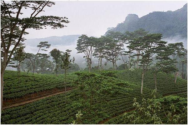 شرکت کشاورزی سریلانکا 2 میلیارد روپیه برای فنّاوری جدید در کشاورزی سرمایه گذاری می کند