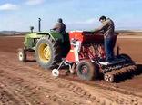 نخود در ۷۰۰ هزار هکتار از زمینهای دیم کشور کشت میشود