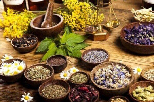 شناسایی دو هزار و ۵۰۰ گونه گیاه دارویی در کشور