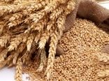 رشد ۸.۲ درصدی خرید گندم در شبکه تعاون روستایی خراسان شمالی