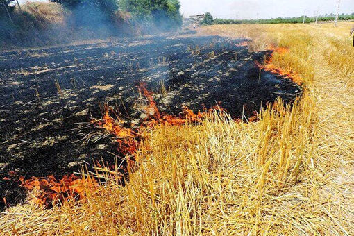 هشدار آتش زدن کاه و کلش مزارع توسط کشاورزان در مراغه