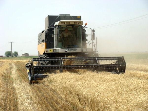 برداشت گندم از اراضی زراعی شهرستان البرز آغاز شد