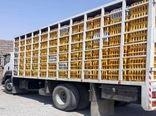۳ دستگاه کامیونت حامل مرغهای زنده قاچاق در قزوین توقیف شد