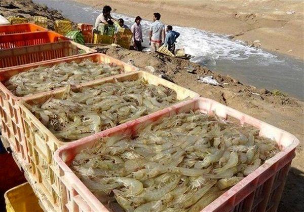 ۲۳ هزار و ۶۰۸ تن میگوی پرورشی در استان بوشهر تولید شد