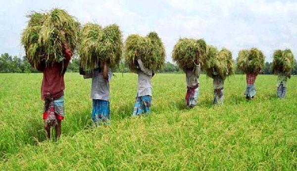 هزینه ۲.۵ میلیارد دلاری بنگلادش برای واردات گندم در سال ۲۰۱۸