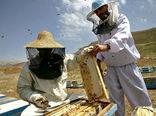 آموزش بهرهبرداران پرورش زنبورعسل  برای سرشماری در مرند