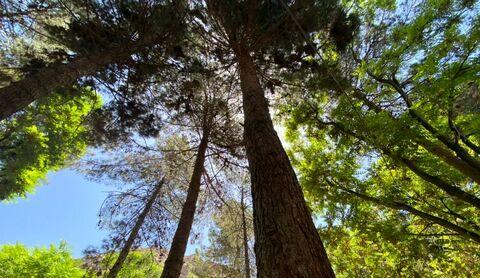 توسعه زراعت چوب در شهرستان فارسان