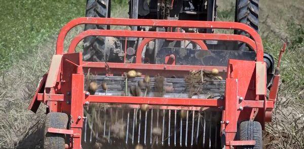تولید ۲۰ نوع بذر سیب زمینی کلاس دار در شهر دامنه