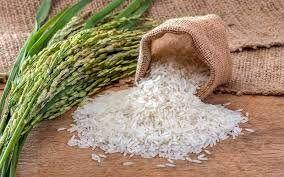 برنامهریزی برای افزایش تولید برنج سفید در آستانهاشرفیه