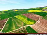 توسعه کشاورزی شهرستان چرداول با کشت کلزا