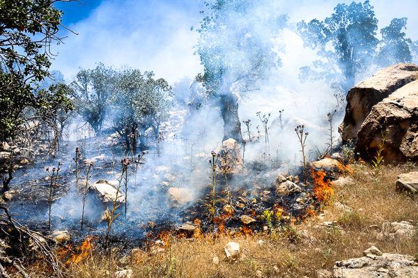 آتش افروزان جنگلومرتع تا 10 سالحبس میشوند