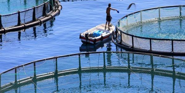 7 هزار تن انواع آبزیان از کردستان صادر شد/۲۰ درصد صادرات استان مربوط به شیلات است