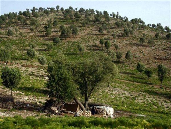 اجرای طرحهای حفاظتی در مراتع و جنگلهای چهارمحال و بختیاری
