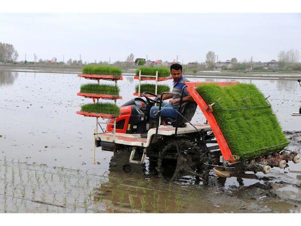 کشت مکانیزه برنج در 6 هزار هکتار شالیزار قائم شهر
