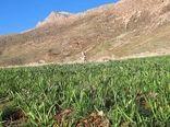 ایجاد سایت الگویی گیاهان دارویی در شهرستان لردگان