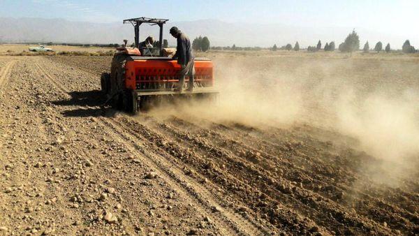 46 هکتار از مزارع شهرستان تهران به کشت جو بذری اختصاص یافت