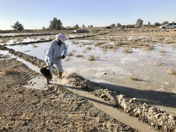 52 هزار هکتار از زمینهای کشاورزی دشت سیستان آبیاری شد