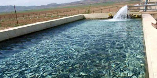 تولید 10220 تن انواع ماهیان پرورشی ، کپورماهیان و قزل آلا ، در سال 98