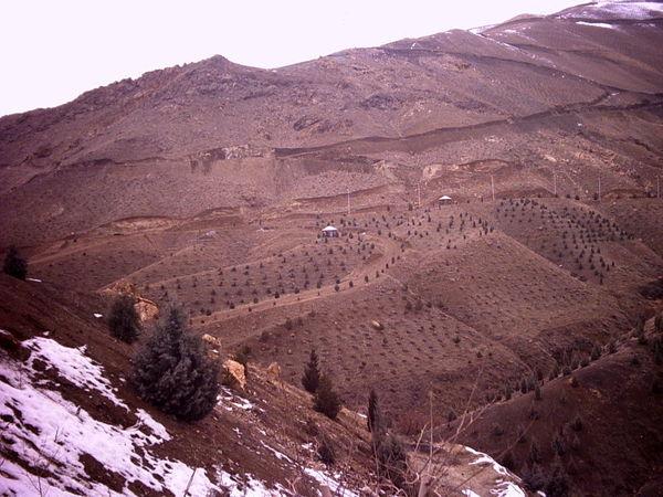کاهش 11 درصدی سطح فضای سبز در فارس