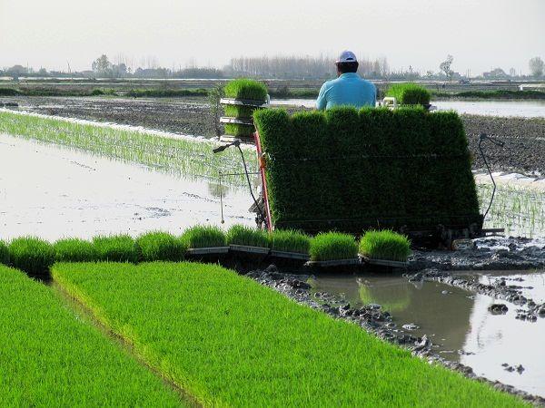 مکانیزه کردن کشاورزی کمک حال کشاورزان ماسال