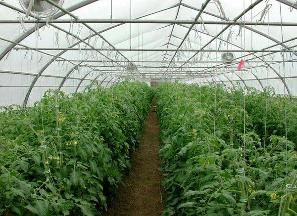 تعداد  70 گلخانه مقیاس کوچک در خلخال پروانه احداث گرفتند