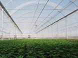 4 هزار و 344 طرح گلخانهای برای دریافت تسهیلات به بانک های عامل معرفی شد