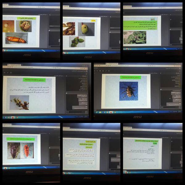 آموزش مجازی  جایگزین مناسب برای آموزش حضوری در شرایط همه گیری کووید 19