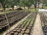۱۴۰ هزار اصله نهال میوه در شهرستان اردل تولید شد