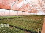 بیش از 1500 هکتار گلخانه فعال در اصفهان وجود دارد