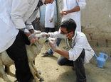 هشدار به دامداران درباره شیوع تب کریمه کنگو در قزوین