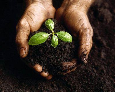 دستیابی محققان ایرانی به پروتکل فناوری تولید بذرهای هیبرید سبزیجات