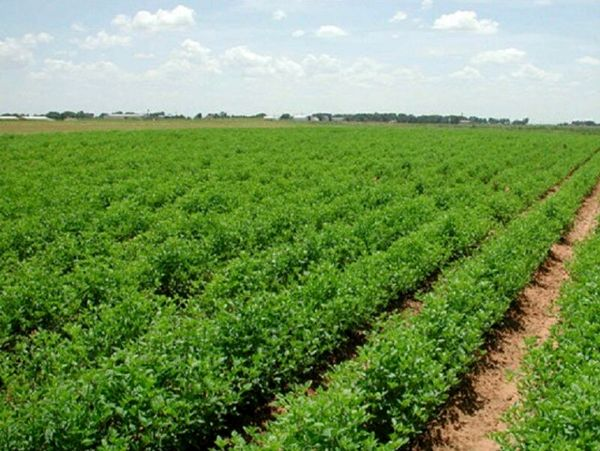 اجرای ۱۰۰ هکتاری طرح توسعه باغات در اراضی شیبدار
