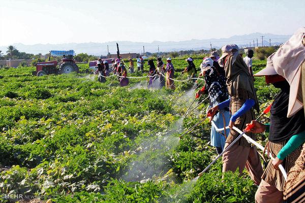 برخورداری 2500 خانوار روستایی خراسان شمالی از بیمه اجتماعی