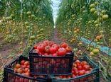 70هزار تن محصول گلخانه درسیستان و بلوچستان تولید می شود