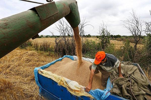 شبکه مویرگی فروش محصولات کشاورزی فعال است