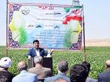 تولید غده بذری سیب زمینی در منطقه شربیان سراب برای اولین باردر استان آذربایجان شرقی